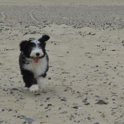 plage juin 2012