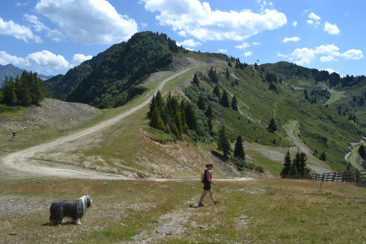 DSC_0344 15-08-2012 13-05-39