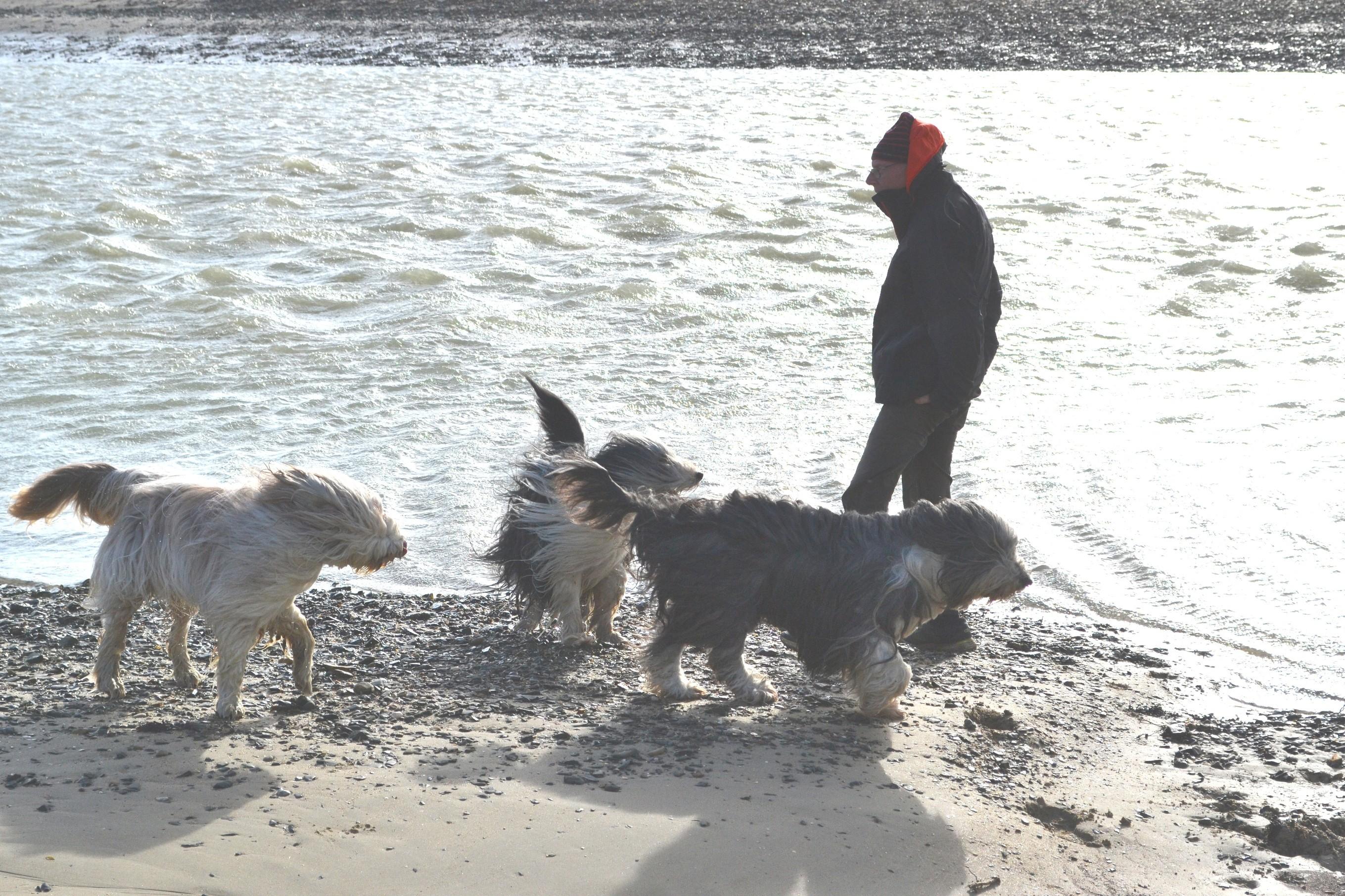 Cery, Hurdy et Gigot avec leur papa