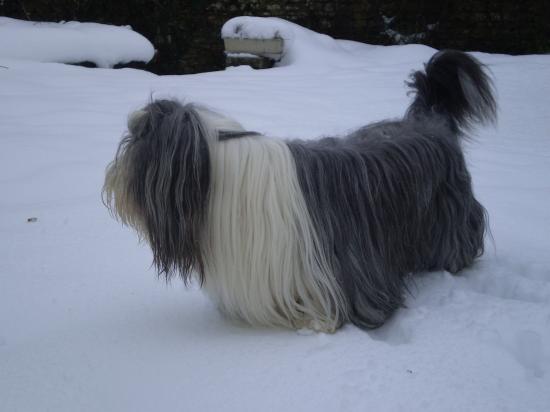 J'aime la neige... un peu...