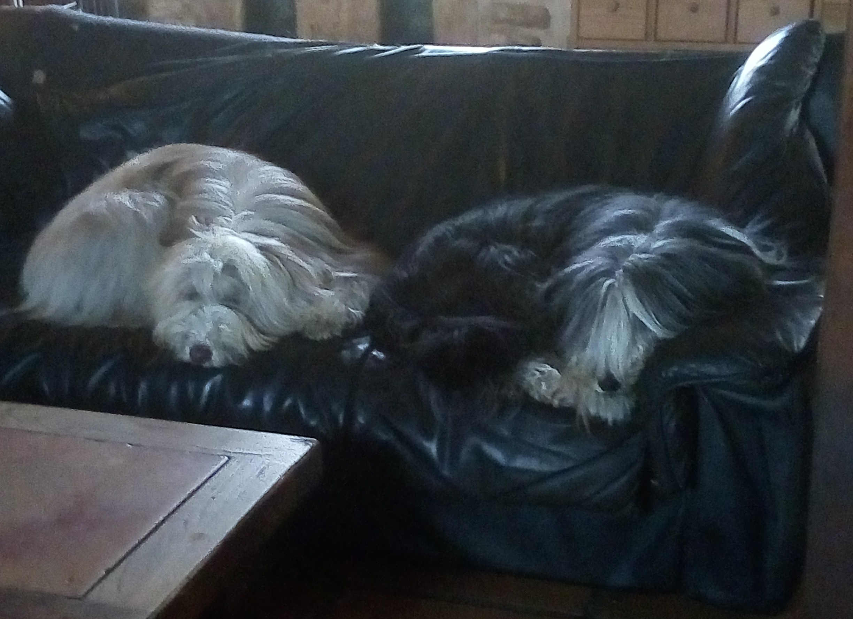 Hurdy et Gigot
