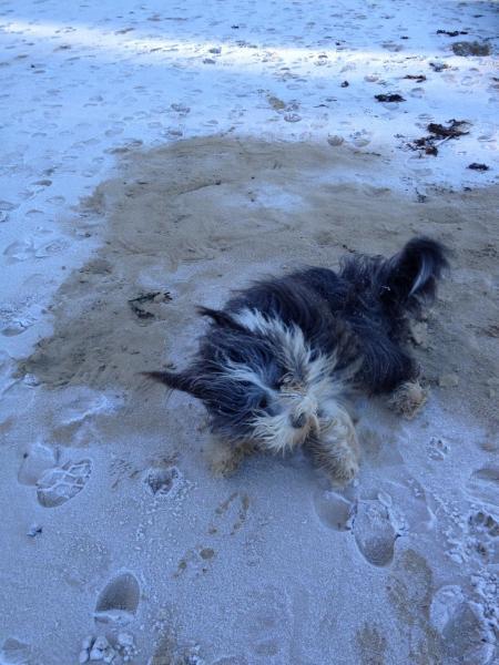 Hoalen janvier 2015 plage
